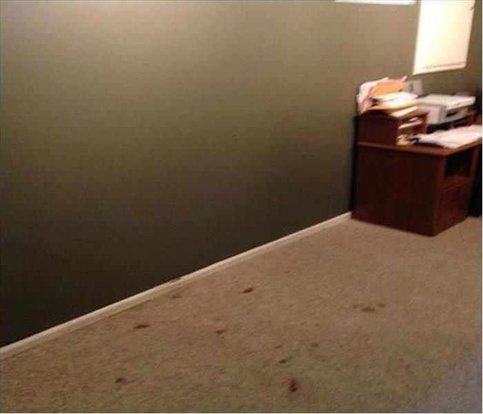Mold Damage – Tucson Home Before