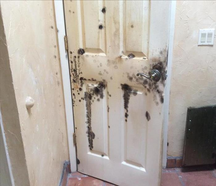 Mold remediation in Tucson, AZ.