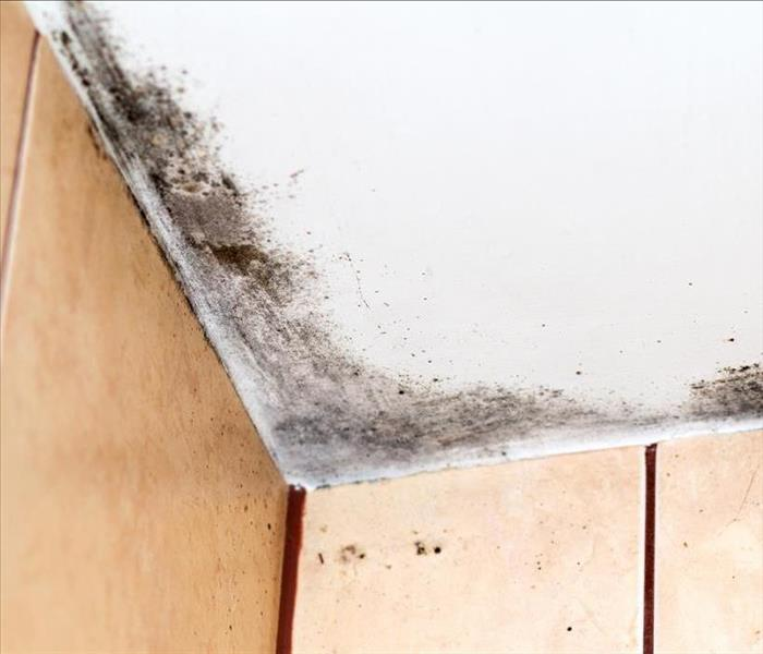 Mold Remediation Mold Damage Experts In Tucson Discuss Problems Inside Bathrooms