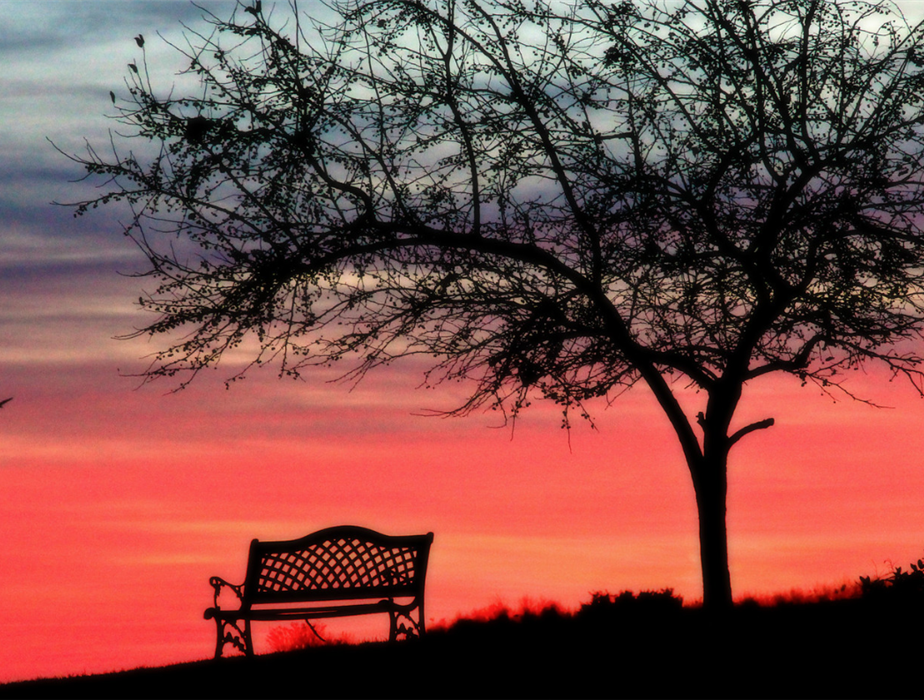 a lonely bench under a tree during sunset